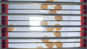 Vue du côté incliné des oeufs nouveau-étendus se déplaçant le long d'un convoyeur double face en métal clips vidéos