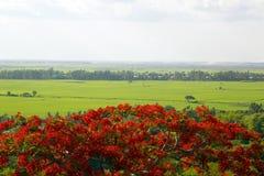 Vue du delta du Mékong, la vie ordinaire autour du Doc. de Chau images stock