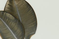 Vue du dièse deux et feuilles de ficus de couleur de bronze sur une surface beige de fond avec l'espace libre Images stock