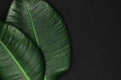 Vue du dièse deux et feuilles vertes de ficus sur une surface noire de fond avec l'espace libre Image libre de droits