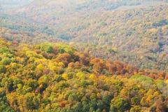 Vue du haut de forêt images libres de droits