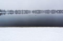 Vue du lac d'hiver dans le matin brumeux Bain de canards sur l'eau Photo libre de droits