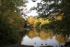 Vue du lac en automne Images stock