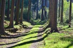 Vue du paysage de forêt images stock