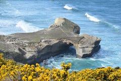 Vue Dunedin Nouvelle-Zélande de plage de tunnel images libres de droits