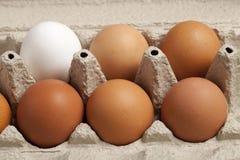 Vue en gros plan des oeufs crus de poulet dans la boîte, blanc d'oeuf, brun d'oeufs sur le fond vert images stock