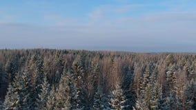 Vue en hausse au-dessus de forêt neigeuse d'hiver banque de vidéos