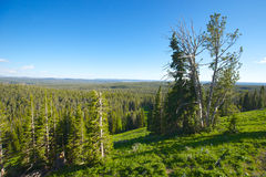 Vue en parc national de Yellowstone Photos stock