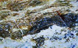 Vue en pierre minérale de sous-groupe serpentin macro Fond brunâtre verdâtre de gemme d'amiante de polymorphes de couleur Photos stock