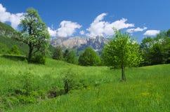 Vue en retard de ressort de la vallée alpine de Kobarid (Caporetto) Photographie stock libre de droits