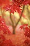 Vue en rouge Image stock