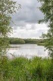 Vue entre les buissons vers un étang naturel photos libres de droits