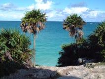 Vue et palmtrees Tulum de mer Image stock