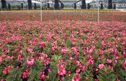 Vue extérieure colorée de base d'élevage de fleur Photo libre de droits