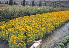 Vue extérieure de base d'élevage de fleur Image libre de droits
