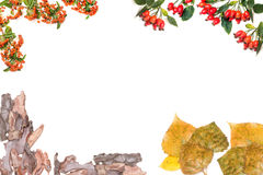 Vue faite d'écorce d'arbre, feuilles d'automne, cynorrhodons et baies de sorbe Images libres de droits