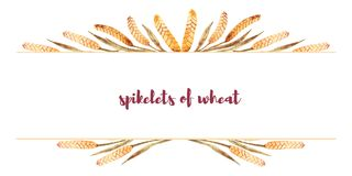 Vue faite d'épillets de blé avec l'espace pour le texte Autumn Harvest illustration stock