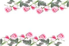 Vue faite de fleur rose de roses d'isolement Photos libres de droits