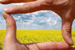 Vue faite de mains à la zone de blé images libres de droits