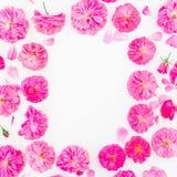Vue faite de roses et pétales pourpres sur le fond blanc Configuration plate, vue supérieure Modèle floral des fleurs roses Photos libres de droits