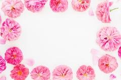 Vue faite de roses et pétales de rose en pastel sur le fond blanc Configuration plate, vue supérieure Modèle de fleur des fleurs  Photo stock