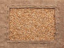 Vue faite de toile de jute avec du blé Image libre de droits