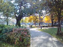 Vue fraîche en parc Images libres de droits