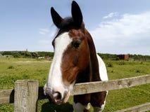 Vue frontale de cheval regardant au-dessus de la barrière Photo libre de droits