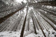 Vue grande-angulaire d'une forêt Photographie stock libre de droits
