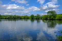 Vue grande-angulaire de lac et de forêt Images stock