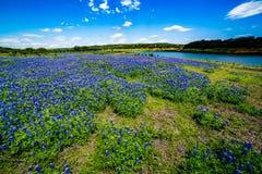 Vue grande-angulaire de Texas Bluebonnet Wildflowers Near célèbre images stock
