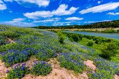 Vue grande-angulaire des WI célèbres de texensis de Texas Bluebonnet Lupinus images stock