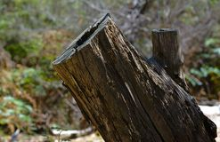 Vue haute étroite d'arbre coupé image stock