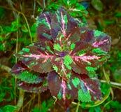 Vue haute étroite des feuilles et de l'usine colorées et belles dans le jardin photo libre de droits