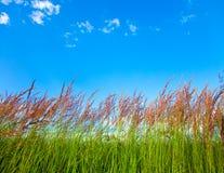 Vue herbeuse Photos stock