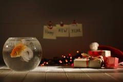 Vue horizontale de composition de Noël Le poisson d'or nage dans l'aquarium circulaire au fond de image libre de droits