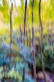 Vue impressionniste de couleurs d'automne dans le Smokies images libres de droits