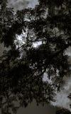Vue inférieure d'arbre noir et blanc photographie stock libre de droits