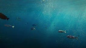 Vue inférieure de hublot de fenêtre de plongée des poissons tropicaux nageant dans l'océan bleu Images stock