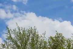 vue inférieure des branches d'arbre et du ciel bleu et des cumulus photos stock