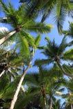Vue inférieure des cocotiers Plage d'île de Saona photos stock