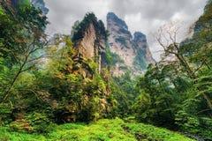 Vue inférieure des falaises raides étonnantes parmi les bois et les criques verts images stock