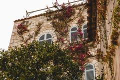 vue inférieure du vieux bâtiment couverte de vigne, photographie stock