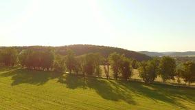 Vue inférieure supérieure aérienne de pré et d'arbres pendant le coucher du soleil banque de vidéos
