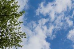 vue inf?rieure des branches d'arbre et du ciel bleu et des cumulus photo stock