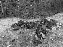 Vue intéressante des rochers couverts de la mousse dans une forêt image stock