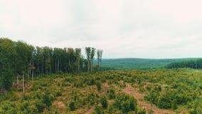 vue 4K aérienne du vol au-dessus d'une belle forêt verte dans un paysage rural banque de vidéos