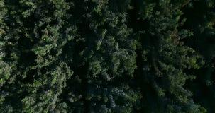 vue 4K supérieure de la forêt banque de vidéos