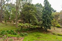 Vue large de jardin vert avec l'herbe, les arbres, les usines, la montagne et la voie, Ooty, Inde, le 19 août 2016 Photos stock