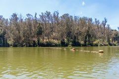 Vue large de lac avec la belle tresse à l'arrière-plan, Ooty, Inde, le 19 août 2016 Image libre de droits